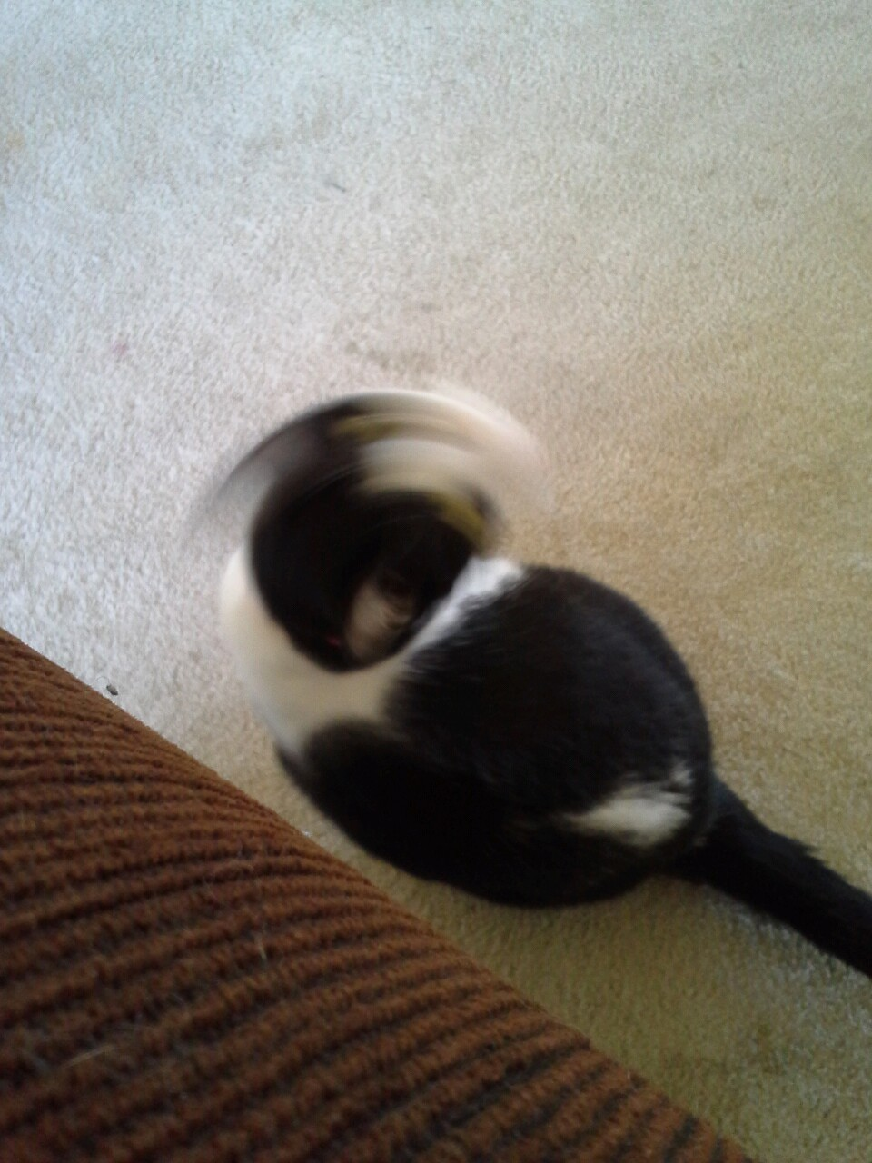 I tried to take a picture of the cat