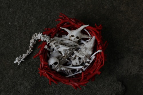 "coral nest o' salty bones, polymer, 2012.. ""Full fathom five my father lies; Of his bones are coral made…"" Shakespeare When I started this piece, I did not realize that certain species of coral have almost an identical physical configuration to bone… research involving grafts, healing properties, regeneration, and cancer fighting properties is ongoing and promising…  cool…               wendy wallin malinow inkhead"