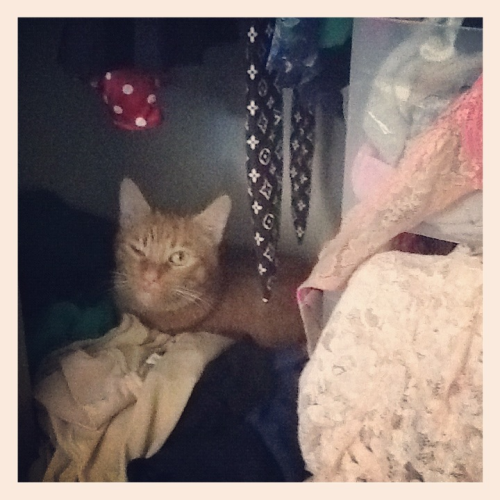 Silly cat, disastrous closet