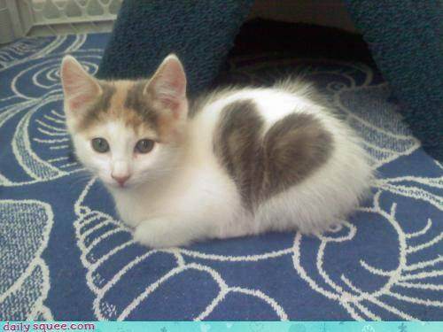 missthaeter:  Heart kitties :)