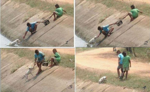 rancidinsanity:  These photos of two children collaborating to rescue a dog who had fallen into a ravine.