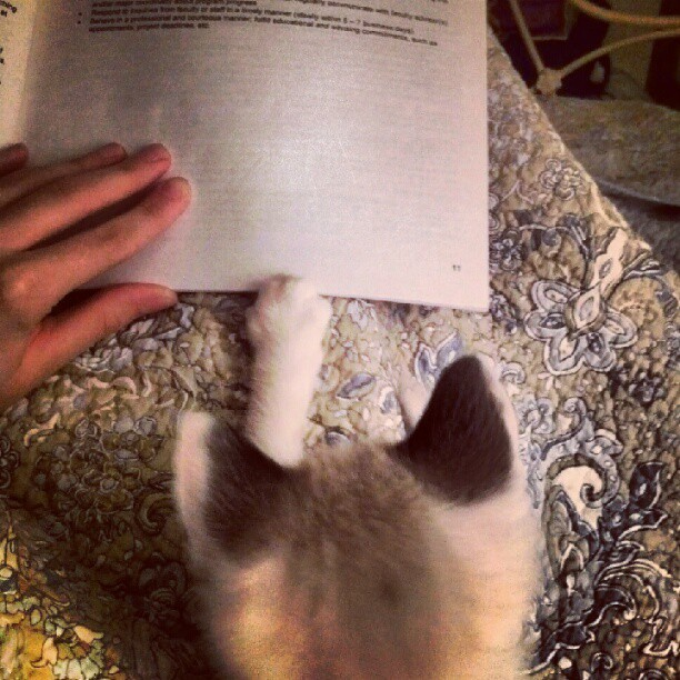 David #Bowie thirsts for knowledge. #kitten #catsofinstagram  (Taken with Instagram)