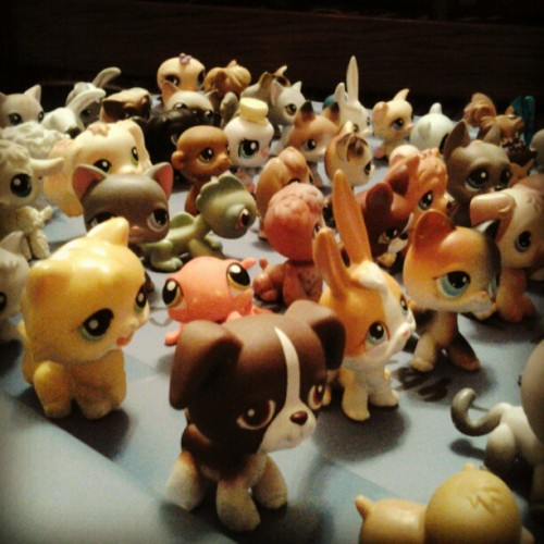 Over #100 #littlestpetshop #pets. Major #cuteness #overload. (Taken with Instagram)