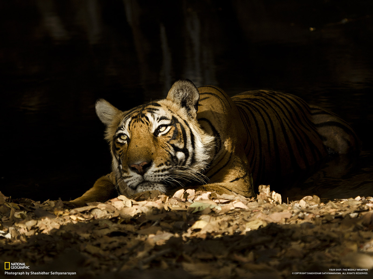 (vía Nationalgeographic)