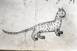 SPOTTED CAT The Master of Game, England 15th century.  Bodleian, MS Bodley 546, fol. 40v