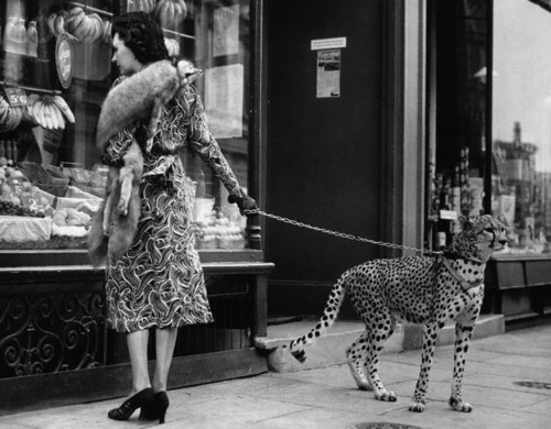 Phyllis Gordon and her pet cheetah.