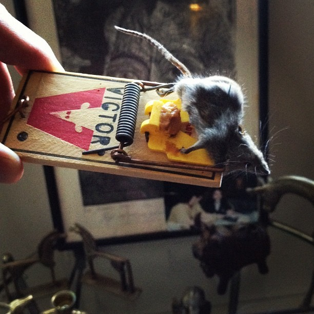 :( still had all that peanut butter #mousetrap #snagged (Taken with Instagram)