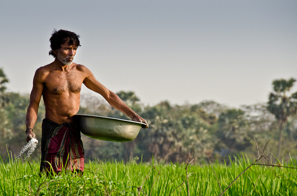 Photo of the Day: A man at work in a rice field, Bangladesh Photograph by Sultan Arefin (Dhaka, Bangladesh), February 2012, Beraid, Dhaka, Bangladesh