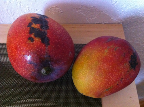 I'm in Florida, having great juicy mangoes from a friend's tree.