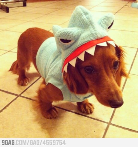 9gag:  I'm a shark!  BOOMER !!!!!!!! MOMI MISS YOU!!!!! *crying inside*
