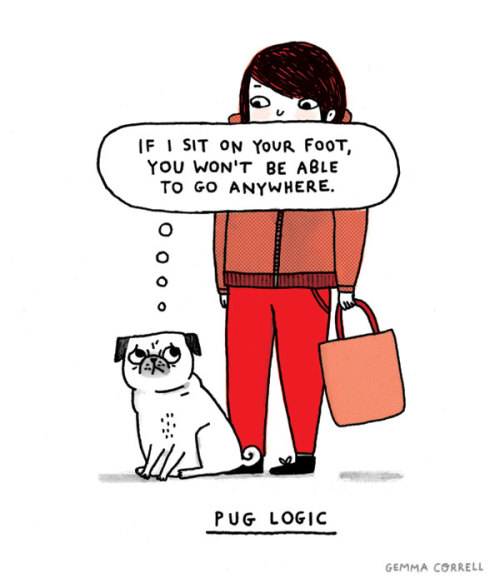 laughingsquid:  Pug Logic