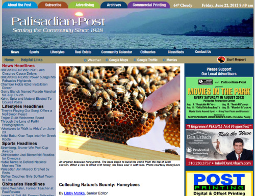 ARTICLE: Collecting Nature's Bounty: Honeybees By Libby Motika, Senior Editor [Palisadian-Post] A triumph of nature and nurture, the queen honeybee is the head and heart of the hive. Plumped on royal jelly (secretion from the glands of worker bees) and pampered by worker bees, the queen is the colony's big mama, whose sole mission is produce up to 2,000 eggs a day.   Royal distinction for the queen bee can be traced to ancient times, some say 10,000 years ago, when human beings became beekeepers. In India, Persia, Rome Egypt and Babylonia, bees were considered sacred animals, symbols of life and fertility.  In the 21st century, bees are no less important: they are responsible for the variety of our food, and ultimately our survival. 'Four out of 10 bites of food we eat are dependent on the honeybee,' says Michael Pollan, professor of science and environmental journalism at Berkeley…When a swarm of honeybees showed up in Rob and Chelsea McFarland's backyard, they called Backwards Beekeepers, a group of organic, treatment-free beekeepers in Los Angeles who remove and relocate honey bees. 'It was pure magic for me seeing the swarm and gentle nature of bees,' said Rob, a featured speaker at the Pali Cares program. The McFarlands are the founders of HoneyLove, a nonprofit organization with two goals: to inspire urban beekeepers and to help legalize beekeeping in Los Angeles.  Contrary to popular lore, honeybees are too busy to be vicious. In the spring, when the nectar flows, bees are working overtime. 'There is lots to forage on in our landscape,' McFarland said. 'Our cities are a banquet for bees. It is estimated that there are nine to 11 colonies for every mile in L.A.'…in the last three years, more than one in three honeybee colonies nationwide has died in a phenomenon know as collapse colony disorder. For farmers, this is a not only a great worry but potentially catastrophic. According to the Natural History's Brown, you need a certain number of colonies to pollinate orchards. Michael Pollan points to the loss of diversity in agriculture as contributing to the bees' demise.  'Monoculture wreaks havoc on honeybees' diets, limiting options once the dominant crop is no longer flowering,' he says. 'Bees can't survive on a continual cornfield; there is nothing to eat.'   The industry is now transporting hives over long distances in order to pollinate orchards. Working the bees nonstop for up to three months causes tremendous stress on the bees. Pesticides and fertilizers further contribute to their demise.  This is where backyard beekeepers can help make up a little for the loss and increase awareness of the problem, the McFarlands say.   'We believe that the city is the last refuge of the honeybee. Our home gardens are free of pesticides, and in city like Los Angeles, there is year-round availability of pollen and nectar.'  While beekeeping is legal in Los Angeles County and in certain cities, such as Santa Monica and Redondo Beach, 'the city of L. A. has no official policy; therefore it is illegal,' Chelsea says.   Los Angeles currently outlaws beekeeping in residential areas, and the city's policy is to exterminate all feral honeybees.   Eight Community Councils within Los Angeles (Mar Vista, Del Rey, Greater Griffith Park,  South Robertson, Silver Lake, Hollywood United, Atwater Village, and West L.A.) have already voted in favor of supporting an urban beekeeping program in residentially zoned districts.  [CLICK HERE TO SIGN HONEYLOVE'S PETITION TO LEGALIZE URBAN BEEKEEPING IN LOS ANGELES!!]  Legalizing beekeeping in Los Angeles would enable better bee management, control and public safety as compared to only having wild hives, which is the current situation, reasons Danny Jensen of Backwards Beekeepers. 'More beekeepers actually mean fewer swarms, fewer feral bee colonies taking up residence where they aren't wanted and fewer grumpy bees.'   For more information on urban beekeeping and upcoming events, visit honeylove.org [click here to read the full article on palisadespost.com]