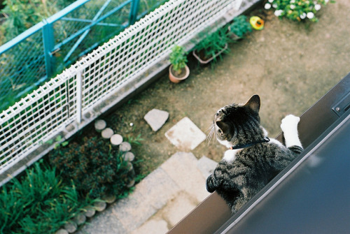 imhum4n:  by miilog on Flickr.
