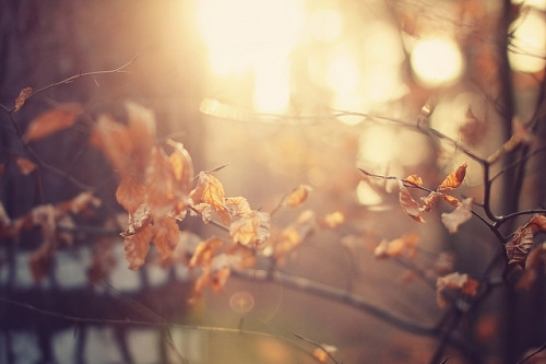 classyasffuck:  Golden Bokeh light by Martin Kühn on Flickr.