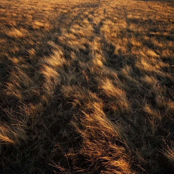 tonsofland:  breathing wheat.