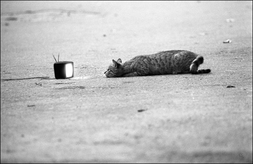fer1972:  My weekend will be like this (photo via tebe-interesno) See you all next Monday…