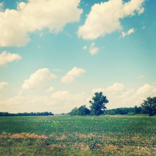 #walden #roadtrip #driving #field #pretty #sky #blue #beautiful #scenic #nature #igdaily #picoftheday #photooftheday #instagood (Taken with Instagram)