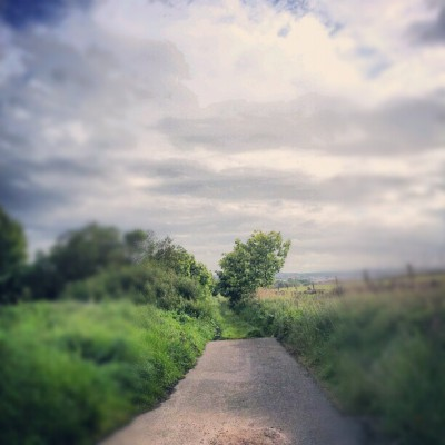 Path To… #tree #bush #weeds #plant #plants #path #sky #cloud #vlouds #50likes #100likes #instagram #instagood #green #wildlife #nature  (Taken with Instagram)