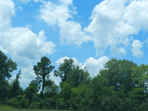 Wilcox CountyJune 20th 2012