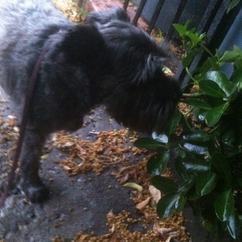 Emmy likes to smell the leaves (Taken with Instagram)