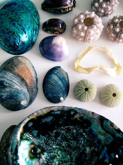 poeticdreamsofmagic:  givemeaburger:  Abalone, Shells And Ocean Air  ♥