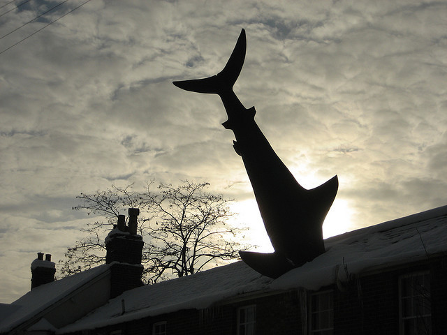 beautifuloxford:   The Headington Shark by Manic Street Preacher on Flickr. Headington, Oxford.