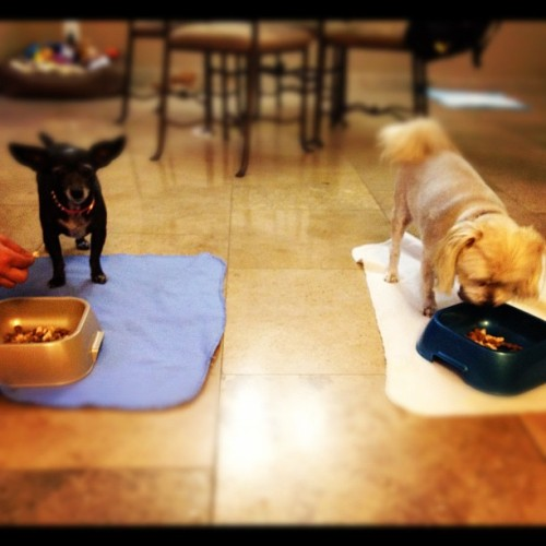 New roommates. I love them. 🐶💓 (Taken with Instagram)