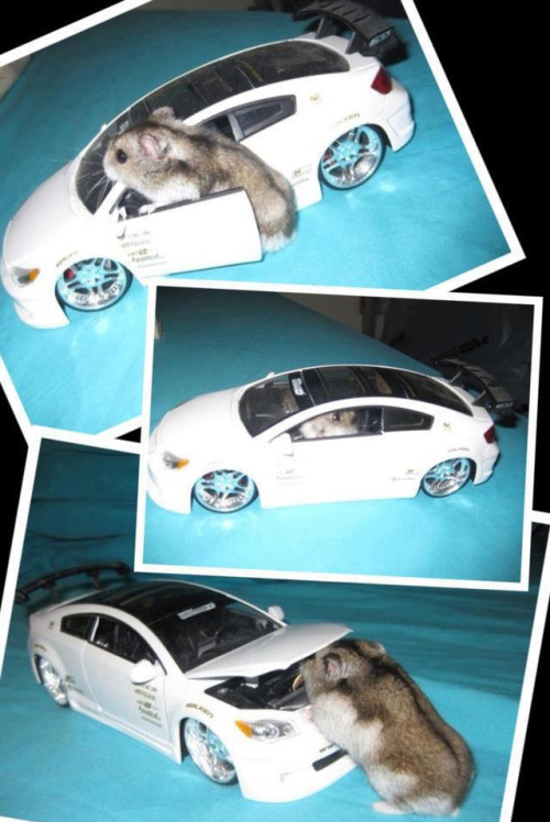 pleatedjeans:  sweet hamster ride via