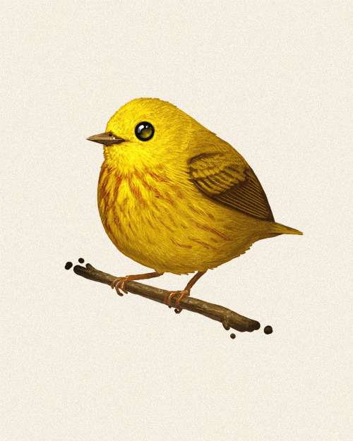 Fat Bird #4: The Yellow Warbler