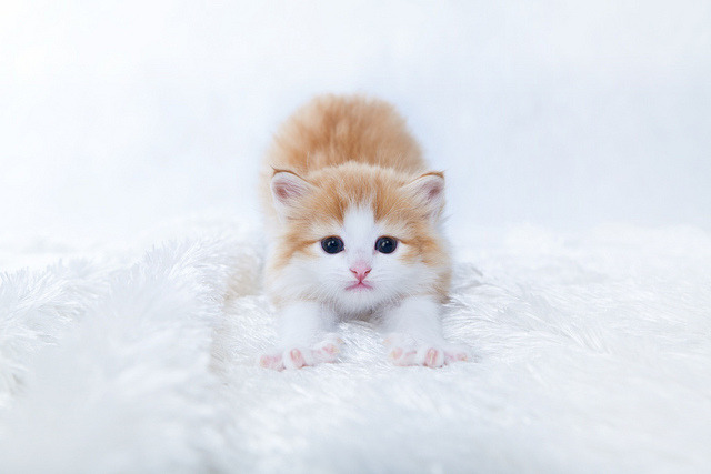 animals-animals-animals:  Kitten (by Kenichi Nobusue)