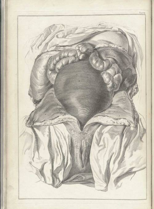 myideabox:  1754 engraving of an eviscerated pregnant female