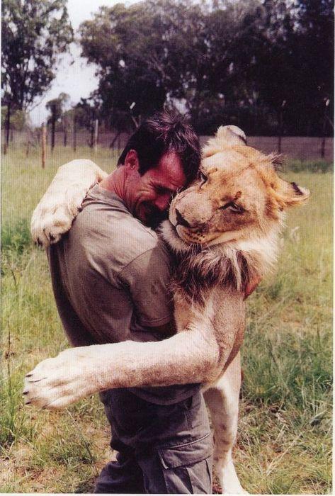 hipster hug lion guy tender wild mans best friend. Black Bedroom Furniture Sets. Home Design Ideas