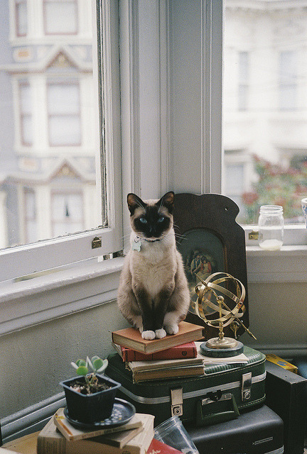 echte:  My cat is cuter than yours by Dani Padgett ∆ on Flickr.