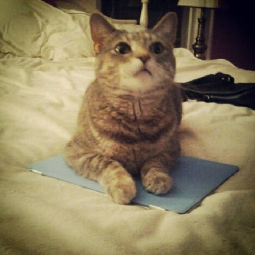 """no mom you can't go on da ipad"" (Taken with Instagram)"