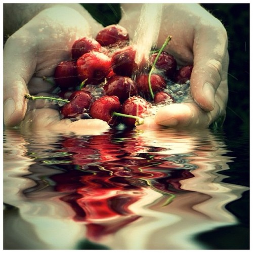 Hand full of fresh cherries in falling #water #aqua #cherry #diet #drop #eat #energy #explosion #food #fresh #fruit #hand #health #healthy #juice #light #liquid #live #nature #red #refreshed #refreshing #ripple #splash #summer #vital #iphonesia #instagram #statigram #traditionalfood #instabest #photowall #photo_cafe #instacool #instawaw #instacanvas #instafood (Taken with Instagram)