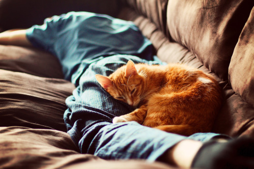 artpixie:  saturday morning (by Simply Stardust)
