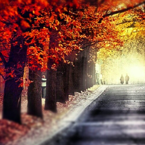 Autumn trees (Taken with Instagram)