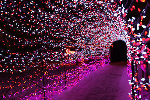 I love Christmas lights and I love this photo!