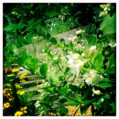 thesoiltoil:  Right now, in Atlanta. #homegardens John S Lens, Blanko Film, No Flash, Taken with Hipstamatic