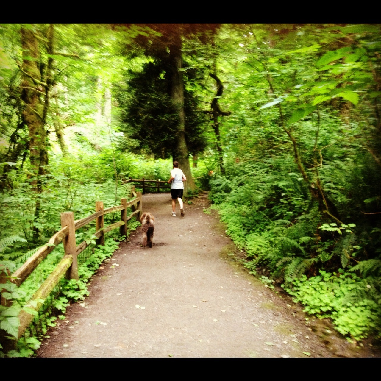 Early Morning Run in Portlandia.
