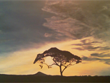 Serengeti Sunset. Acrylic on canvas