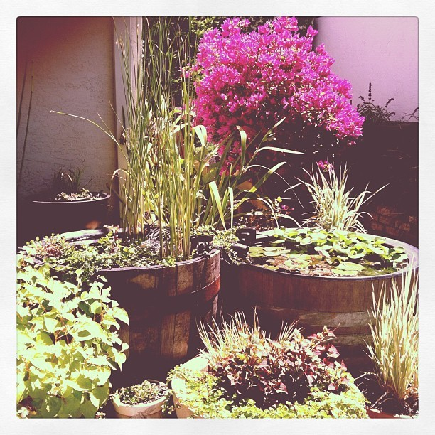 Backyard. ❤🌾 (Taken with Instagram)
