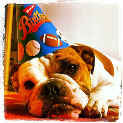 #HappyBirthday Daddy! #Puppy #Bulldog (Taken with Instagram at Post Luminaria)