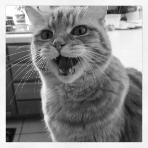 Instagram, I would like to introduce to you, my cat. (Taken with Instagram)
