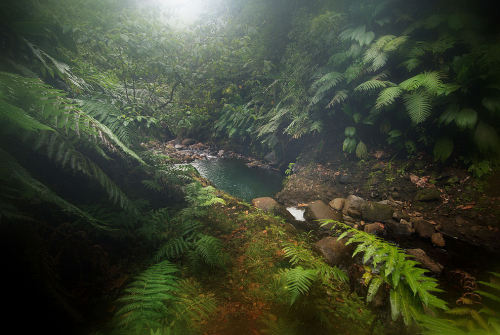 Rainforest (by guix29)