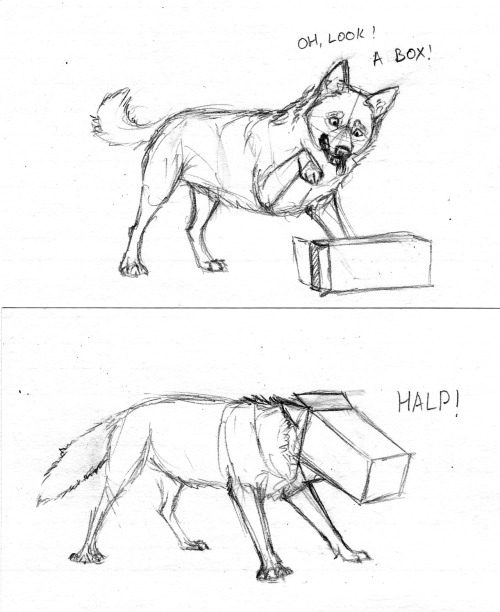 Wolfdog vs. box I felt like I hadn't drawn any canids for a while, and I wanted to draw something silly. Zorak usually isn't this silly, but everyone gets a bit silly when cardboard boxes become a factor. Also, there are a ton of cardboard boxes in the hallway.  I want to sit in them, but they are for holding books and things, not for adventuring.