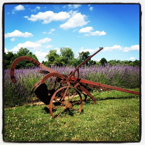 Carrousel Farms en Bucks County, PA (Taken with Instagram)