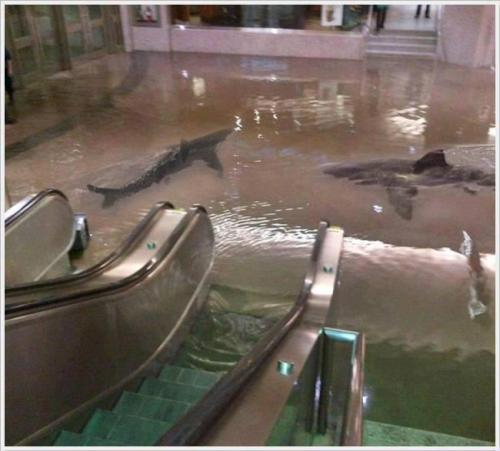 Apparently the shark tank broke in the Kuwait Scientific Centre.