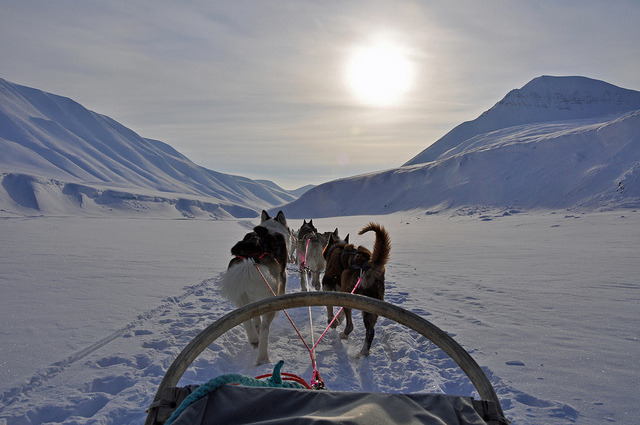 Dog Sledding ride, Svalbard, Norway by Zinni (I'm off, back early July) on Flickr.