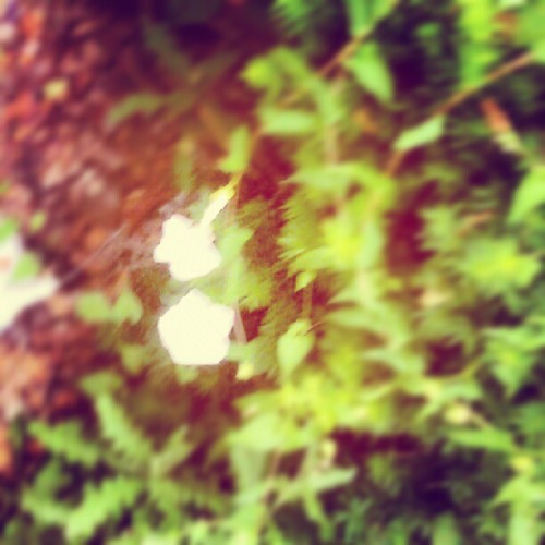 Motion: White Lilies in the wind. #photoaday  (Taken with Instagram)
